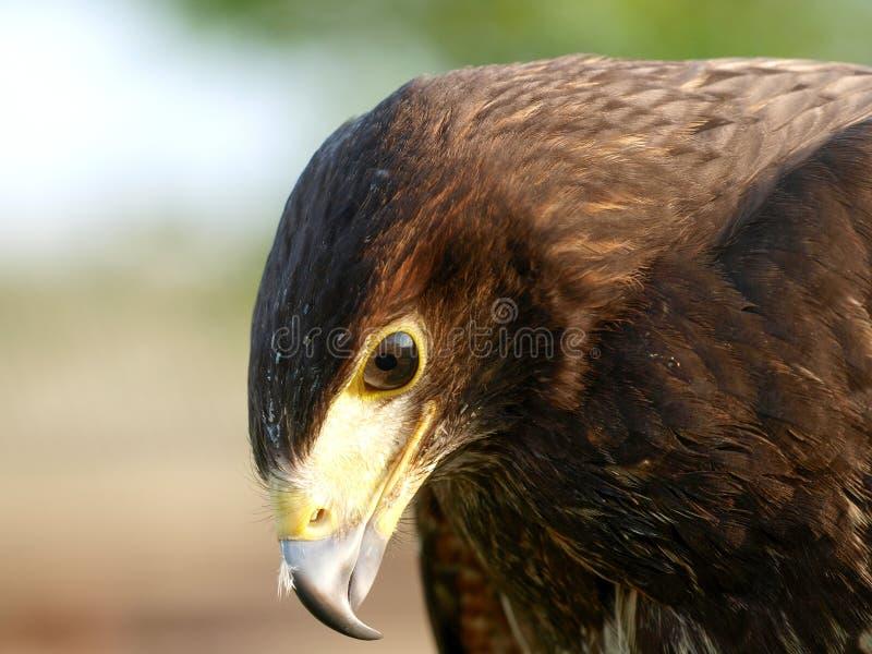 L'oiseau de prient images stock