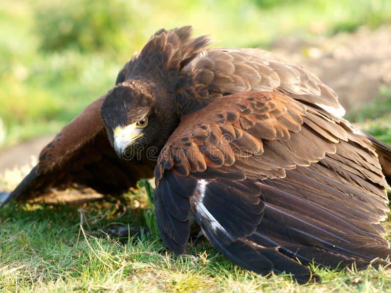 L'oiseau de prient photos stock
