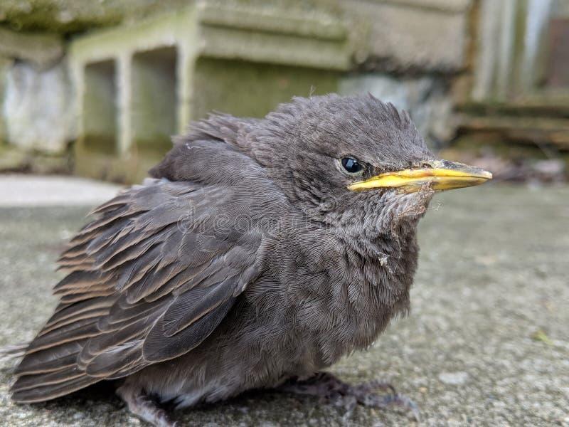 L'oiseau de repos est patient et toujours pour la caméra photos libres de droits