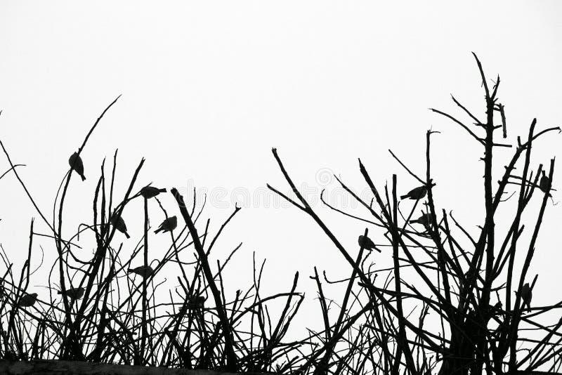 L'oiseau de sommeil silhouette le fond image stock