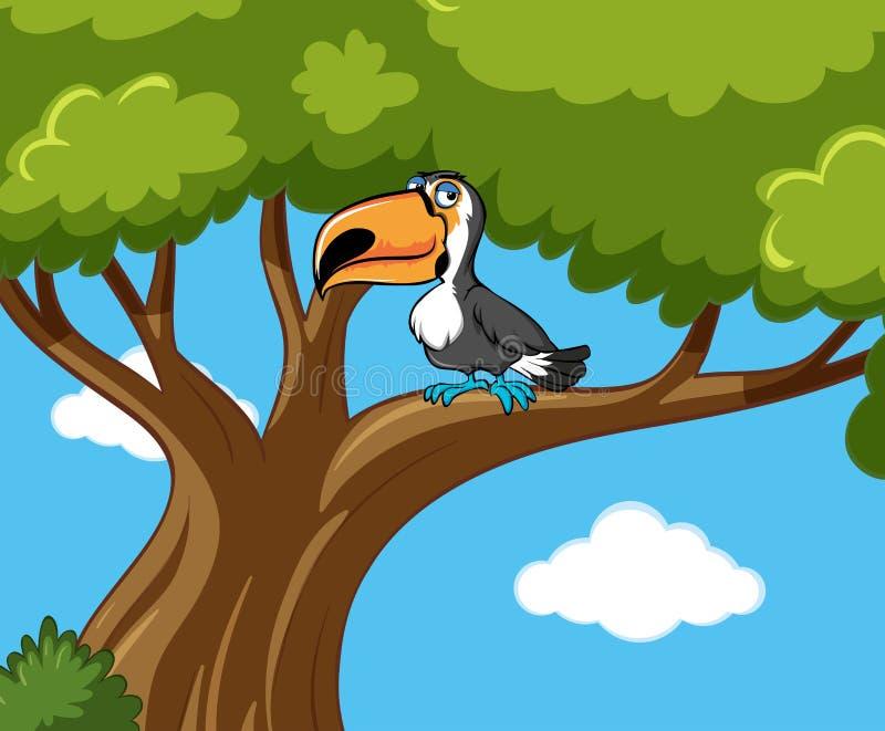 L'oiseau de toucan se tient sur la branche illustration stock