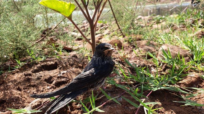L'oiseau est perdu image libre de droits