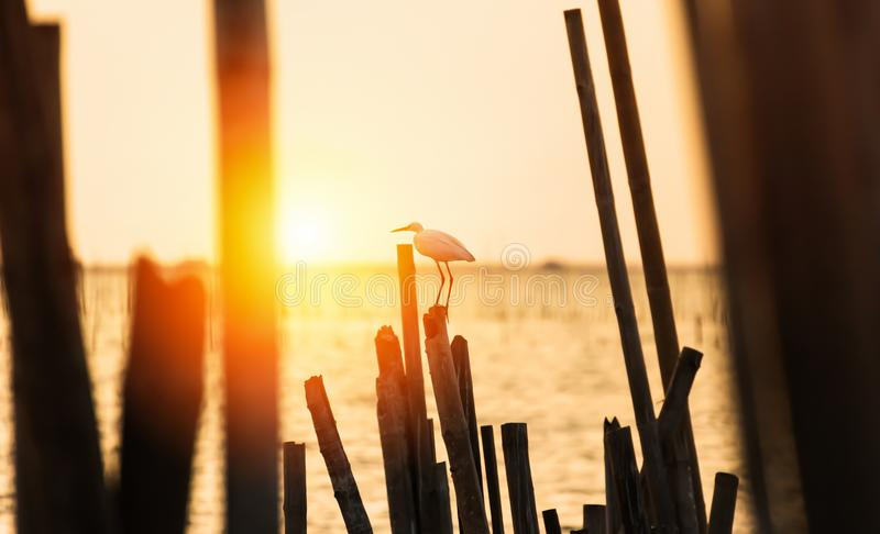L'oiseau est sur le tronçon entre le coucher du soleil près de la plage et l'eau de mer images stock