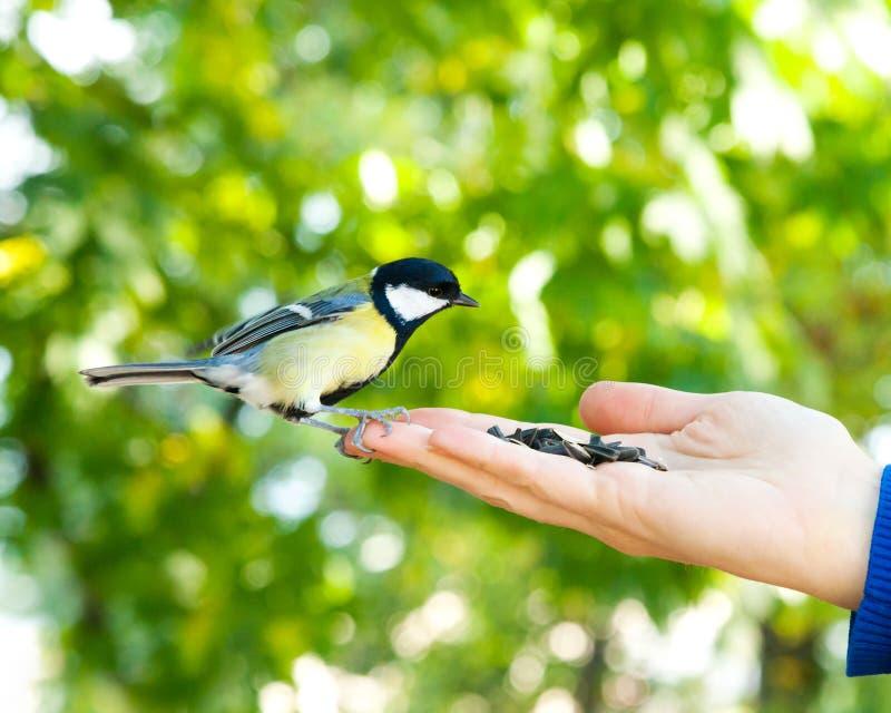 L'oiseau prend une graine de la main humaine image stock
