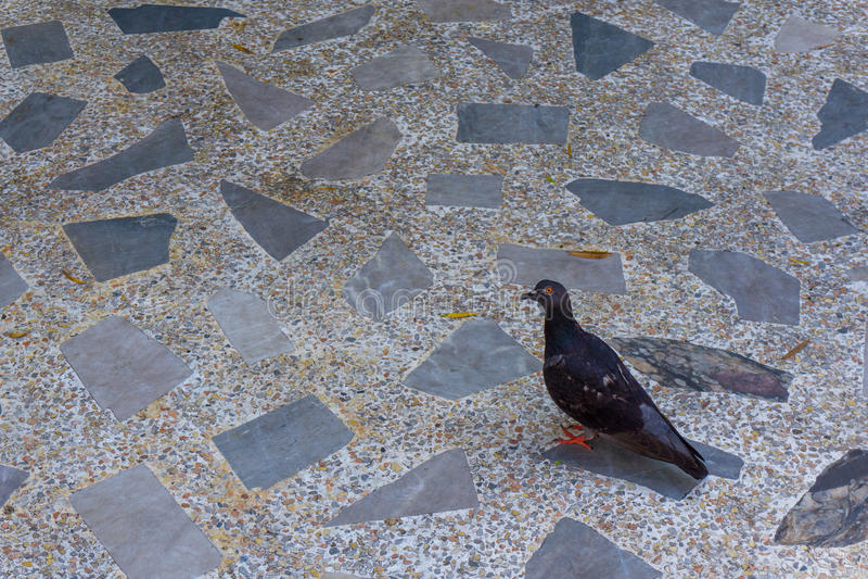 L'oiseau rouge d'oeil images stock