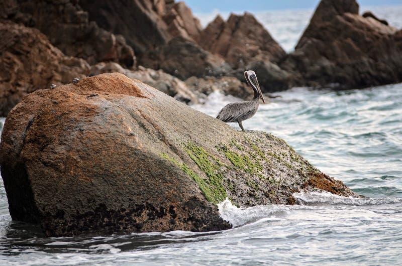L'oiseau sur les eaux affilent photo stock