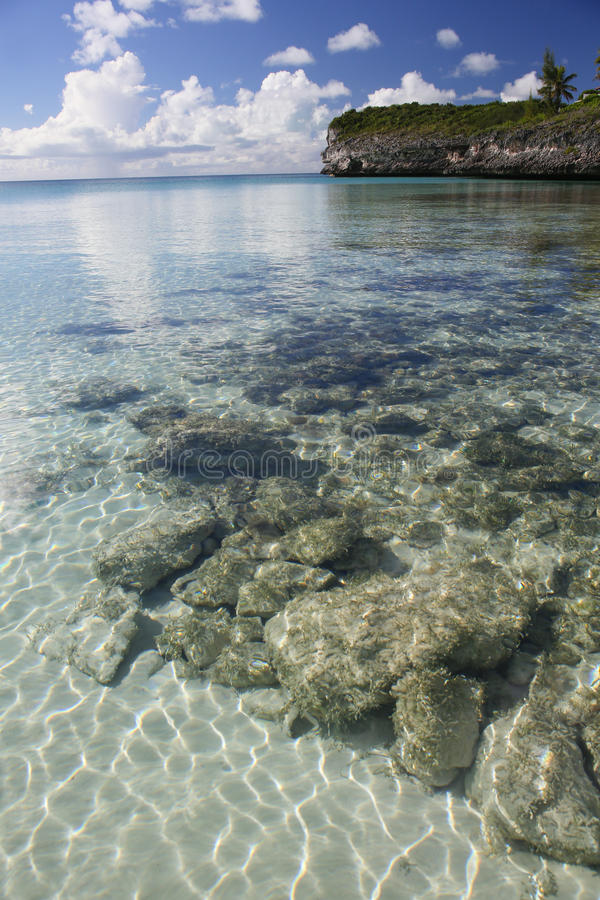 L'oleandro fa il giardinaggio vista sul mare 2 fotografie stock libere da diritti