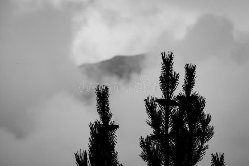L'Olimpo in Grecia dietro la nebbia Conifera sul primo piano fotografia stock libera da diritti