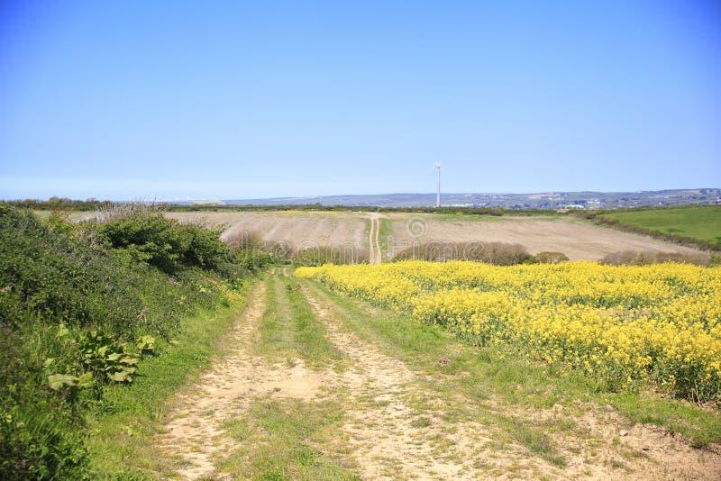 L'olio di colza, i campi gialli di colza sono diventati una caratteristica del Regno Unito fotografia stock libera da diritti