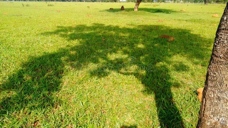 L'ombra dell'albero nel campo immagini stock