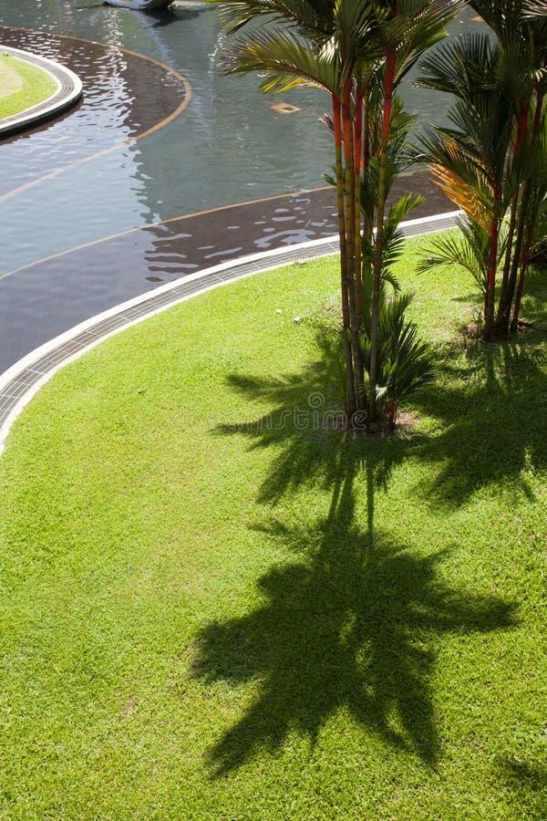 L'ombra delle palme sull'erba verde fotografie stock libere da diritti