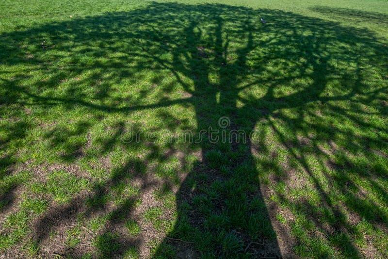 L'ombre d'un arbre beau r?fl?chit sur l'herbe images libres de droits