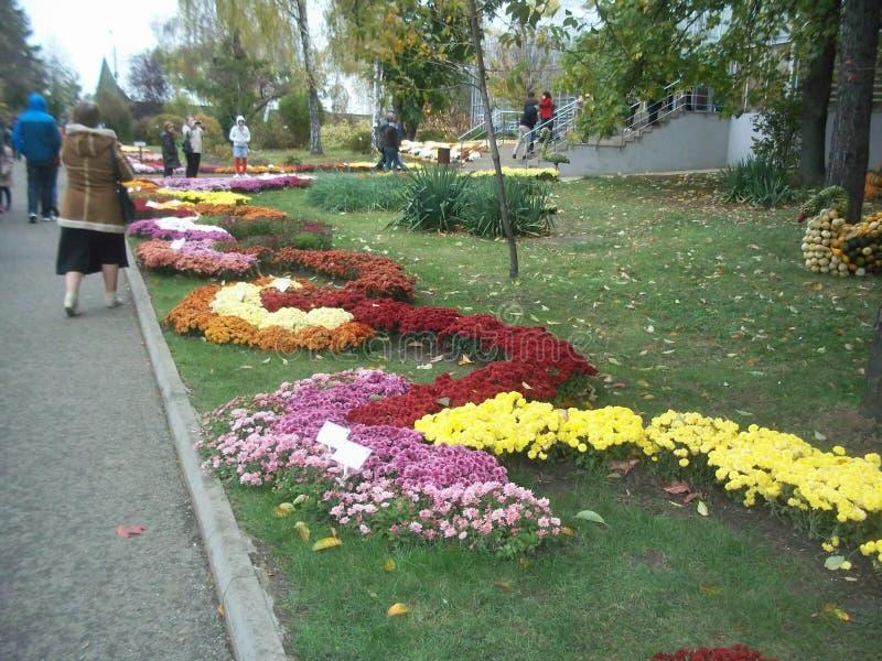 L'ONU de fleur le jardin botanique Iasi photos libres de droits