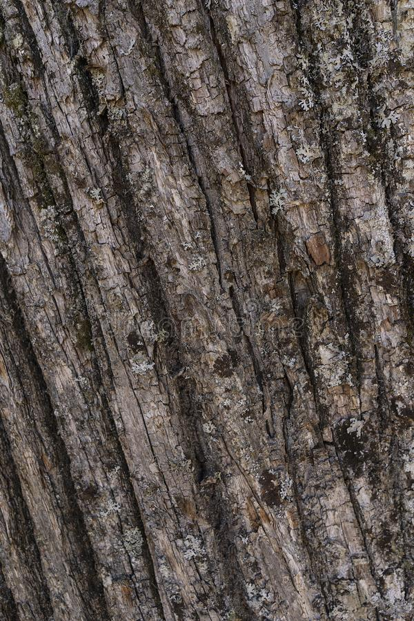 L'ONU de fond d'écorce de châtaigne la forêt image stock