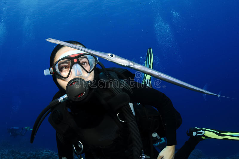 L'operatore subacqueo di scuba esamina i pesci della cornetta fotografie stock libere da diritti
