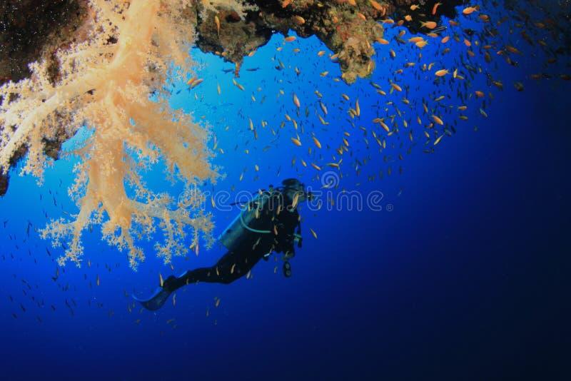 L'operatore subacqueo di scuba esplora la barriera corallina fotografia stock