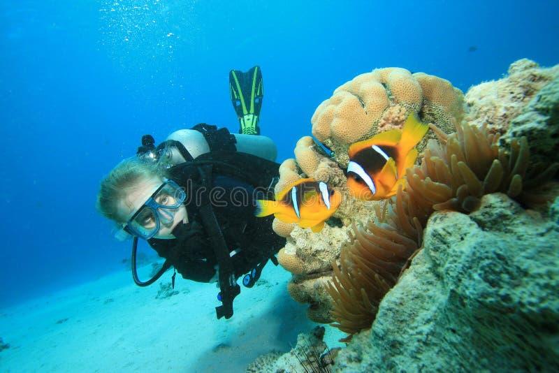 L'operatore subacqueo di scuba trova Nemo fotografie stock libere da diritti