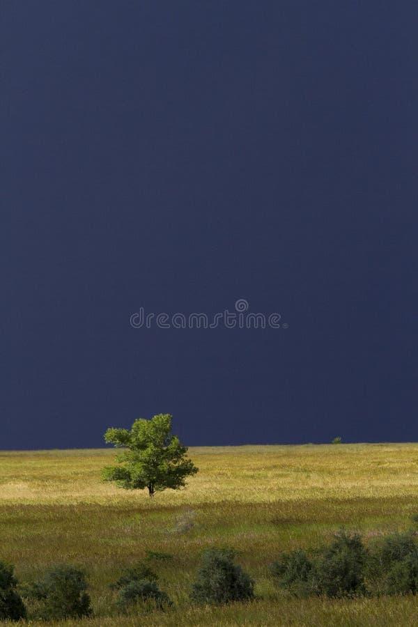 L'orage du Colorado accentue l'arbre de prairie photographie stock