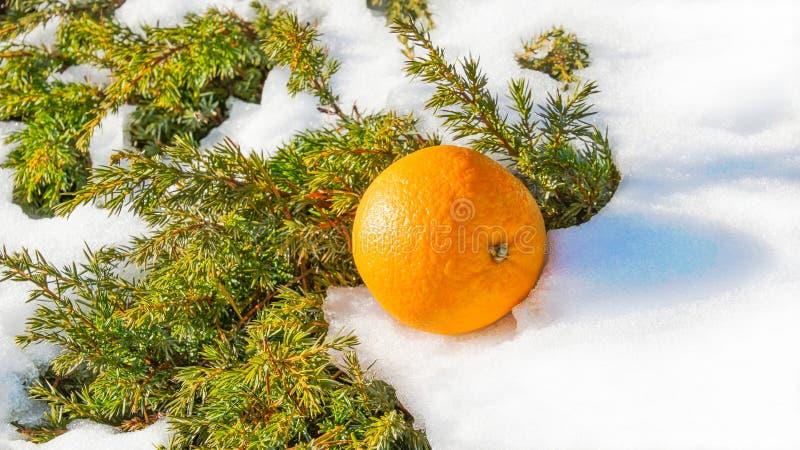 L'orange chauffe le sapin bloqué par la neige d'asmall images stock
