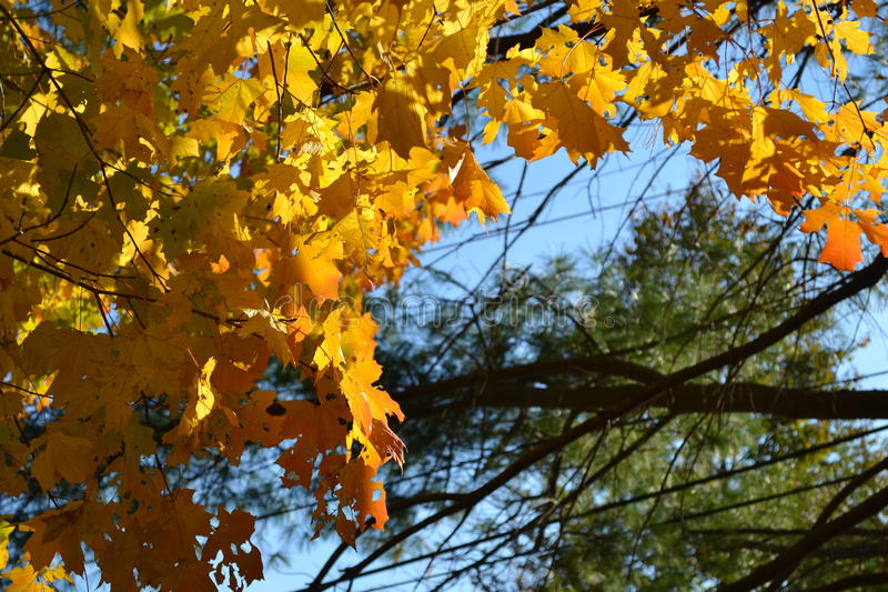 L'orange part au soleil image stock