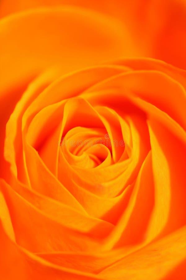 l'orange s'est levée image libre de droits