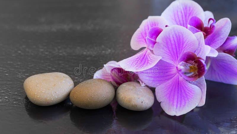 L'orchidée avec des pierres de massage, arrangement de station thermale avec de l'eau se laisse tomber sur l'orch images stock