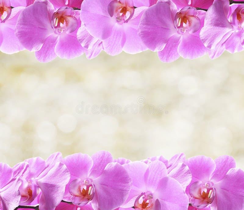 L'orchidée fleurit la trame photographie stock
