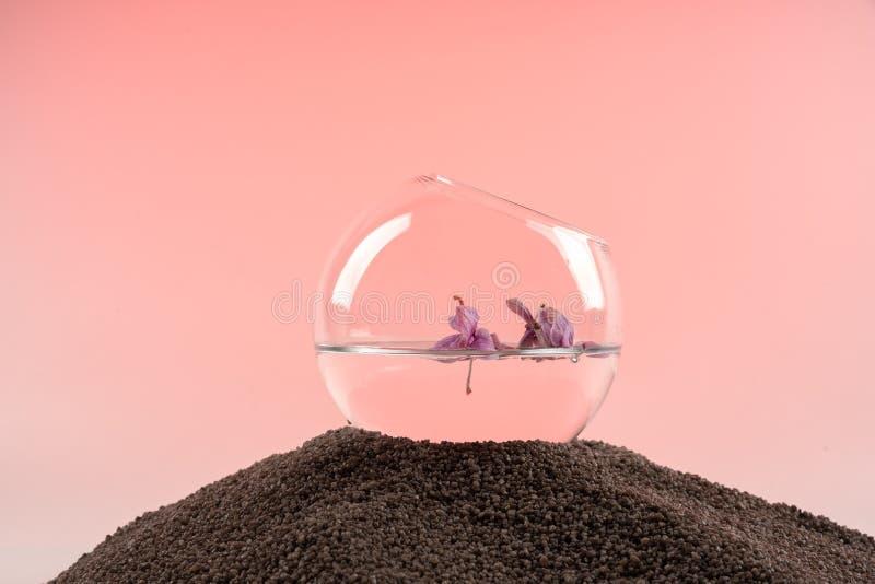 L'orchidée part dans l'eau dans un vase en verre sur une colline du sable images stock