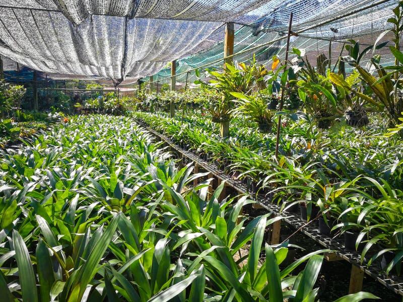 L'orchidée plante la pépinière image libre de droits