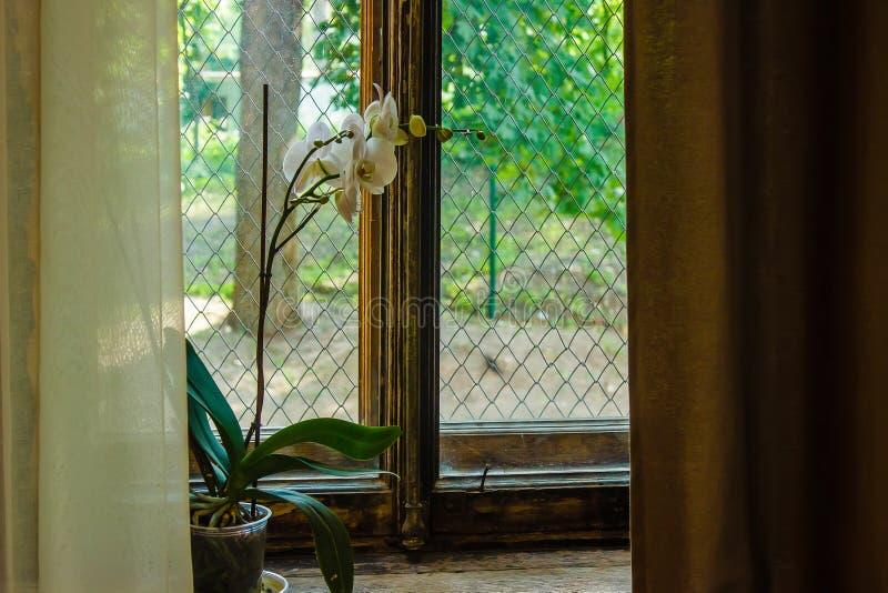 L'orchidea bianca è sulla vecchia finestra con la baia dorata degli elementi fotografia stock