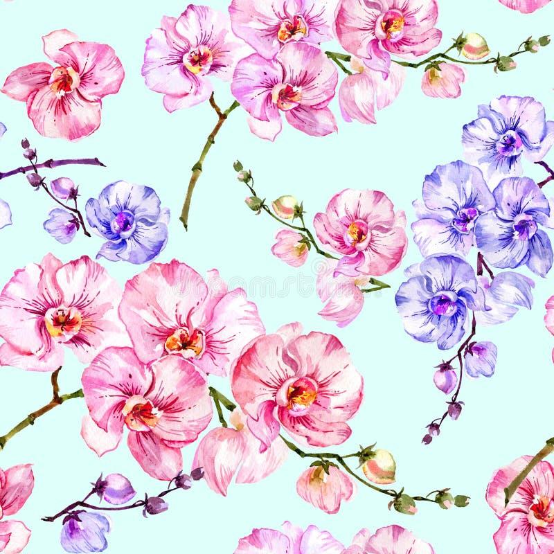 L'orchidea blu e rosa fiorisce su fondo blu-chiaro Reticolo floreale senza giunte Pittura dell'acquerello Illustrazione disegnata royalty illustrazione gratis
