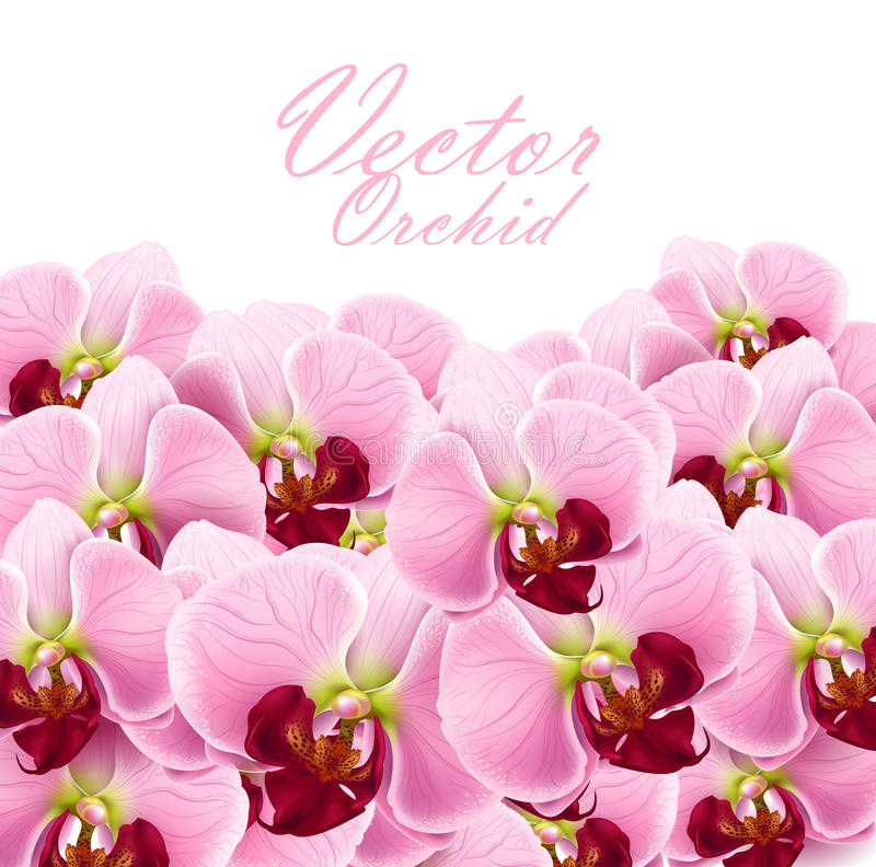 L'orchidea fiorisce la priorità bassa illustrazione vettoriale
