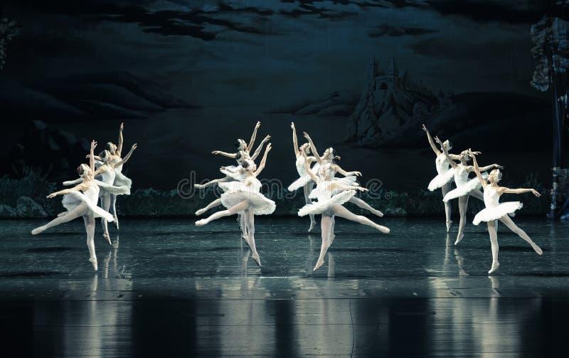 L'ordinato nella formazione di lago swan di balletto-balletto fotografia stock