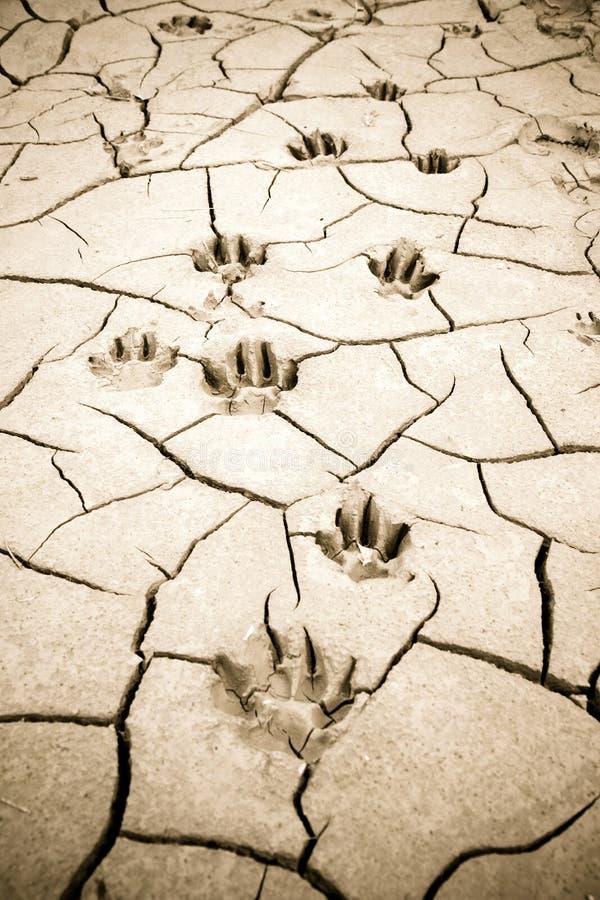 L'orma ha andato su una sabbia fangosa da una zampa del cane immagini stock