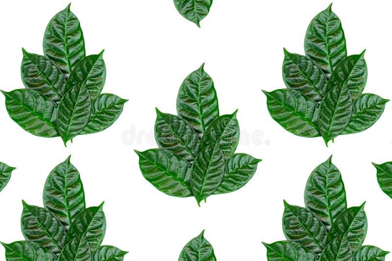 L'ornamento dello sfondo naturale del manifesto delle foglie verdi su bianco ha isolato il fondo fotografie stock libere da diritti