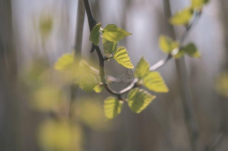 l'oro di autunno colorato lascia nella luce solare luminosa - vecchio sguardo d'annata fotografie stock libere da diritti