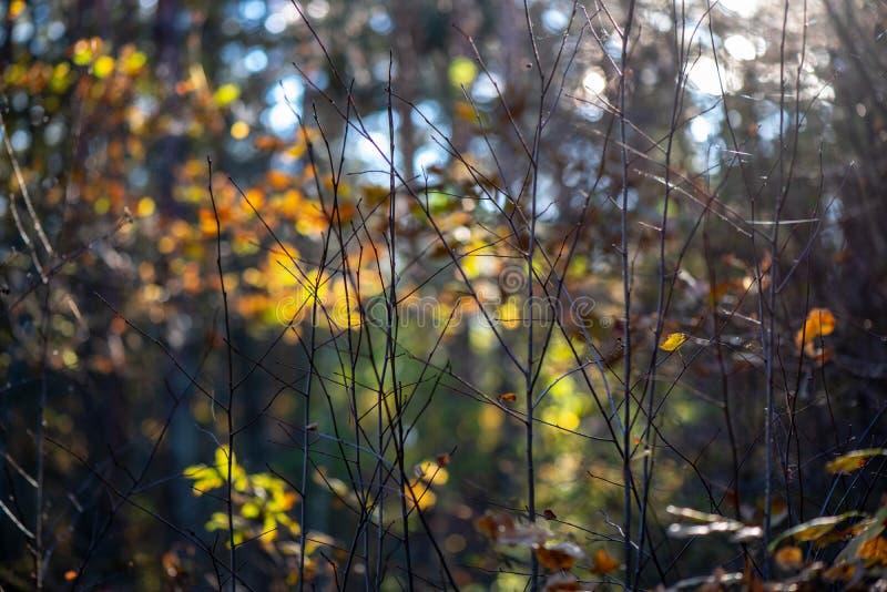 l'oro di autunno ha colorato le foglie con il fondo della sfuocatura ed i rami di albero immagine stock libera da diritti