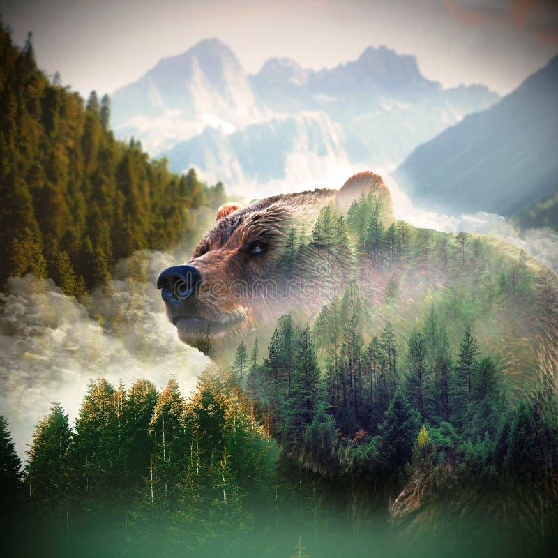 L'orso è l'anima della foresta fotografia stock