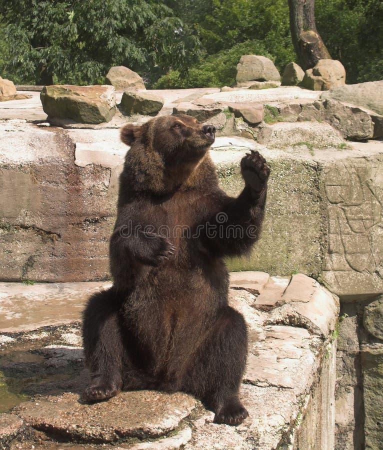 L'orso lo accoglie favorevolmente fotografia stock