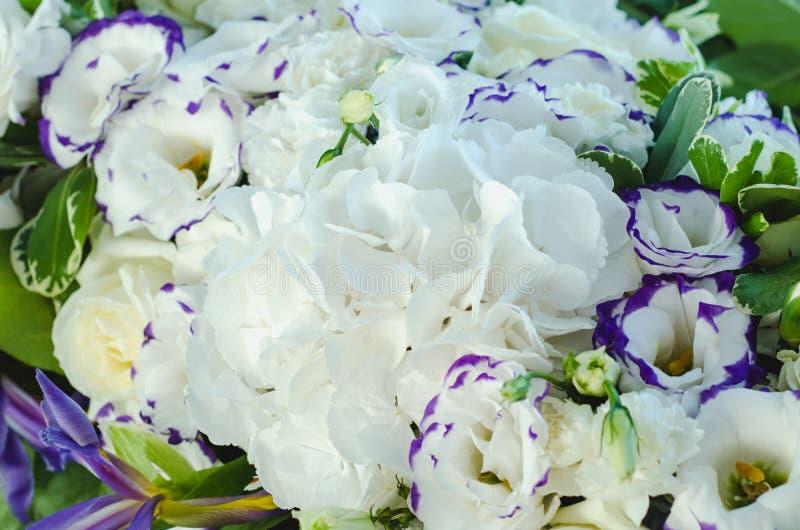 L'ortensia bianca ricca, le rose crema delicate, l'eustoma porpora, ubriacone lascia in una bella decorazione Grande mazzo di fre fotografia stock libera da diritti