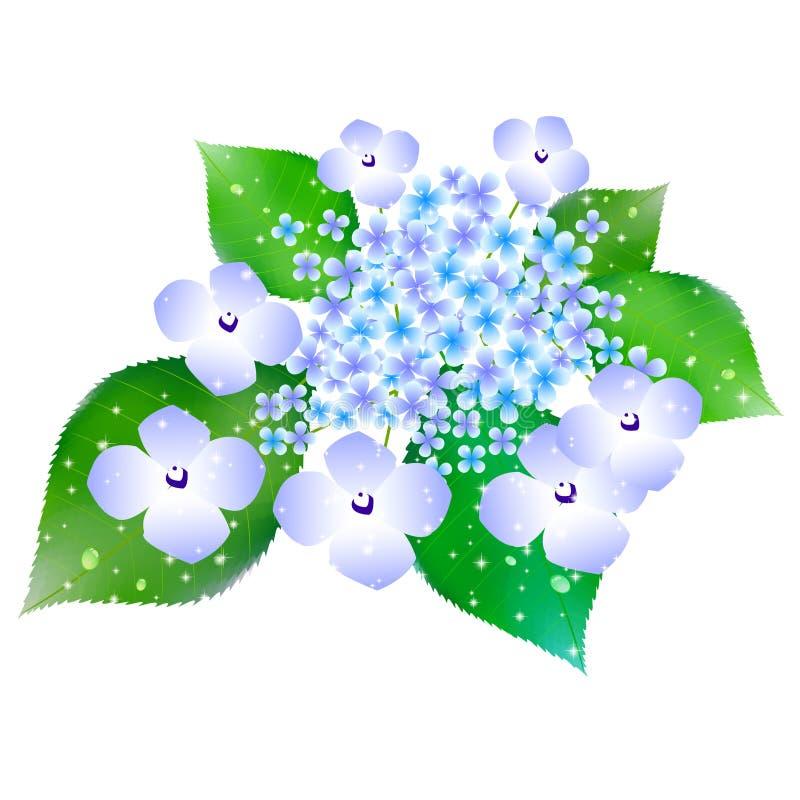 L'ortensia fiorisce il fondo di stagione delle pioggie illustrazione di stock