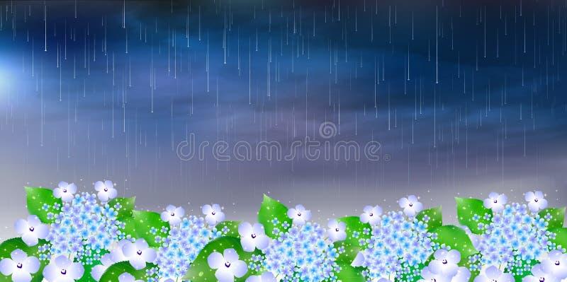 L'ortensia fiorisce il fondo di stagione delle pioggie royalty illustrazione gratis