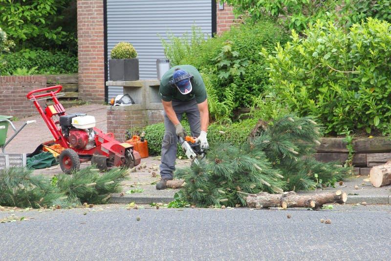 L'orticoltore sta segando i tronchi di un albero con una motosega immagini stock libere da diritti