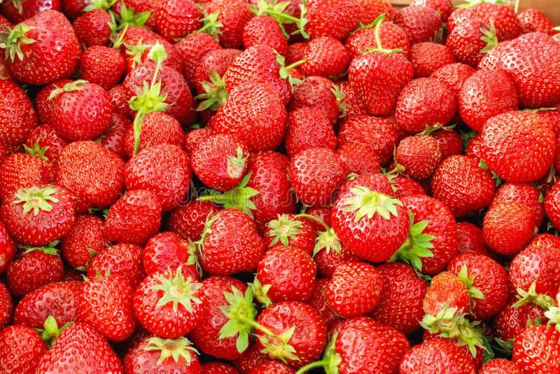 L?r av mogna smakliga jordgubbar Sommarsk?rd royaltyfria foton