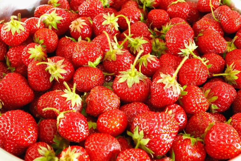 L?r av mogna smakliga jordgubbar Sommarsk?rd fotografering för bildbyråer