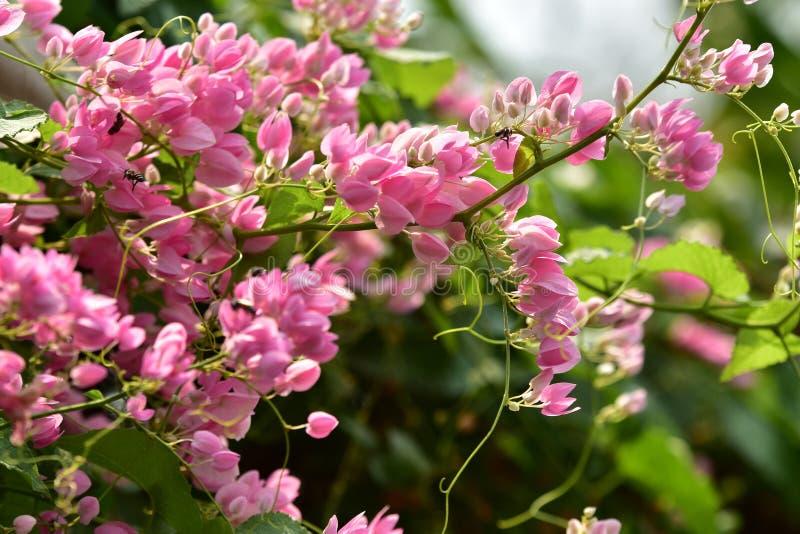 L Roze bloembloesem op zijn boom in de lente royalty-vrije stock afbeelding