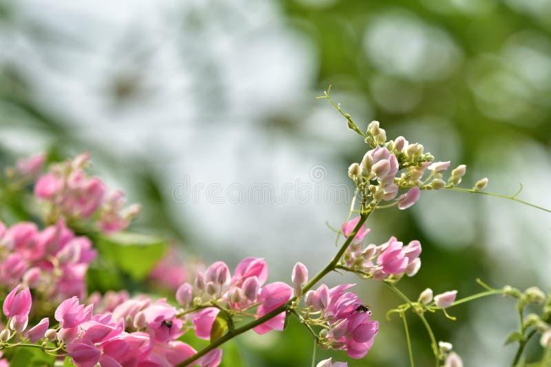 L Roze bloembloesem op zijn boom in de lente stock foto