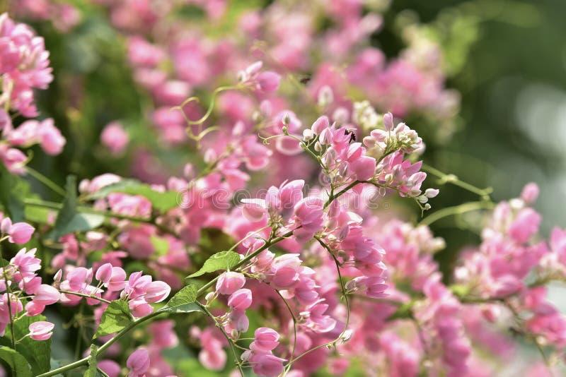 L Roze bloembloesem op zijn boom in de lente royalty-vrije stock fotografie