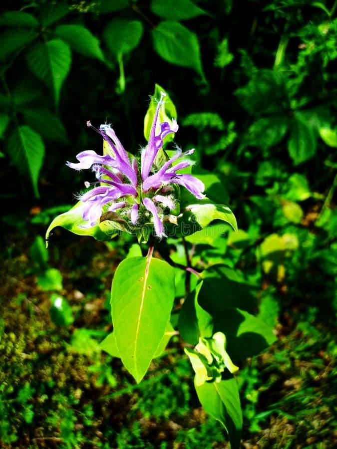 L?s blomma i skogen arkivbild
