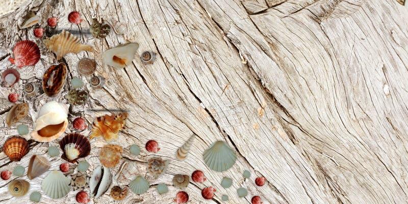 L'?t? ?cosse le fond en bois brun de banni?re images stock